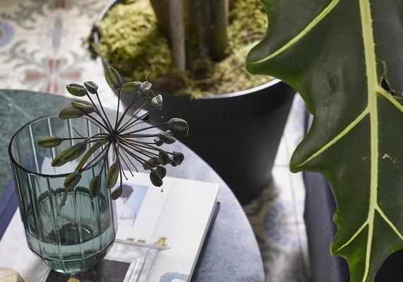 Vijf prachtige planten waar je beter van gaat slapen!